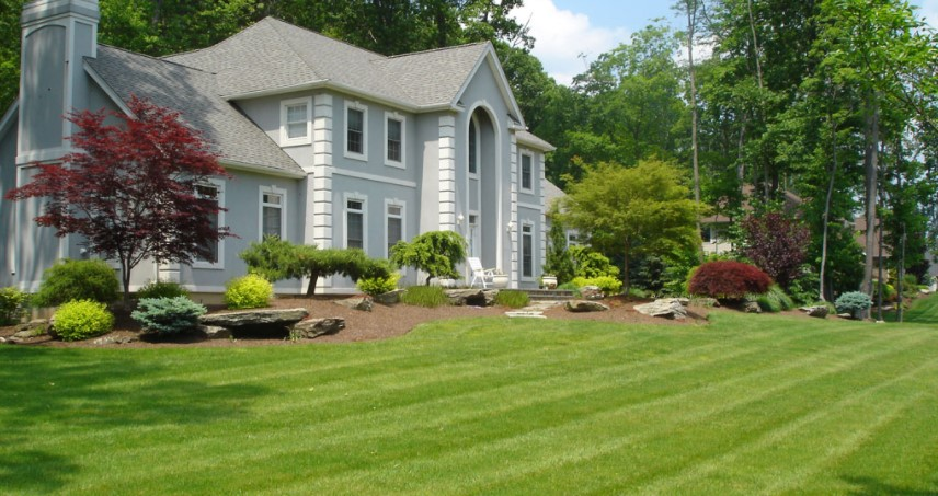 Lawn Regular Maintenance
